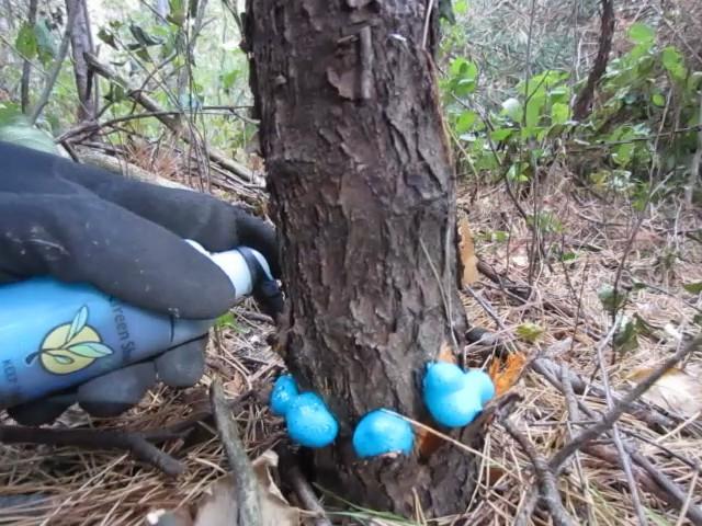 stump removal | Green Shoots News | 640 x 480 jpeg 110kB