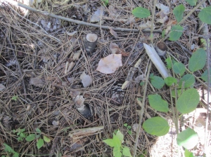 Buckthorn stump with re-sprouts