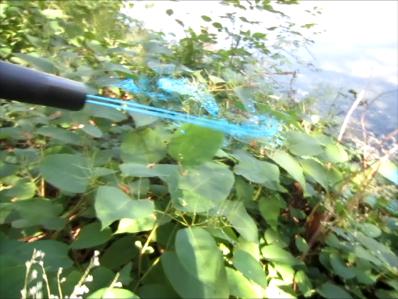 Foam Stream Targeting Invasive Knotweed