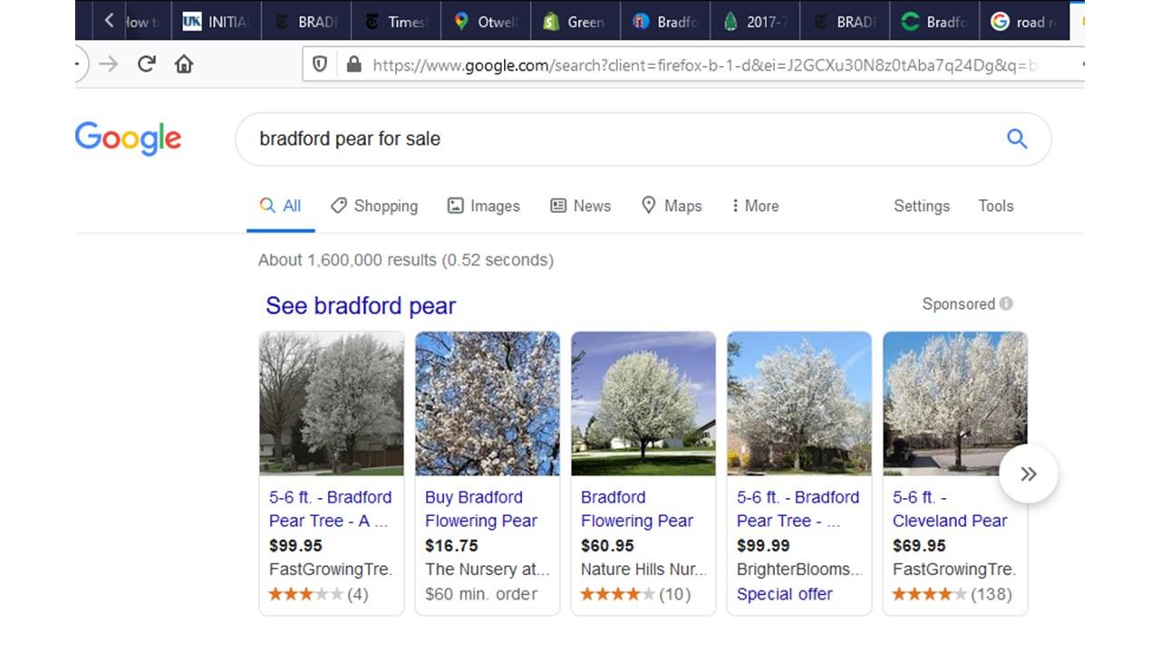 2020-03-30-GoogleSearchBradford